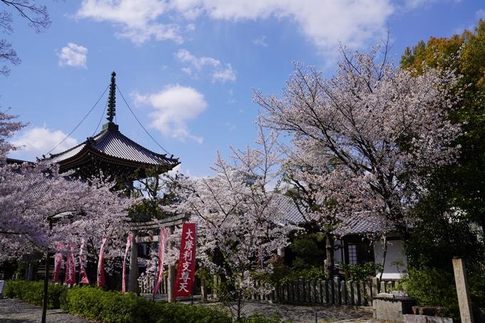 京都_桜_2020_28 本法寺 No6