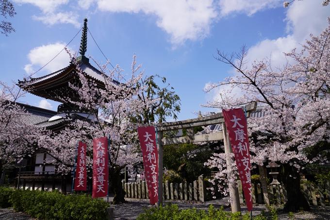 京都_桜_2020_28 本法寺 No8