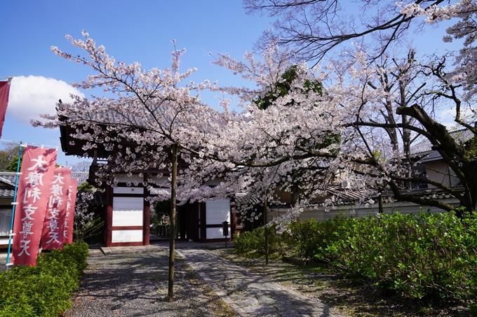 京都_桜_2020_28 本法寺 No10