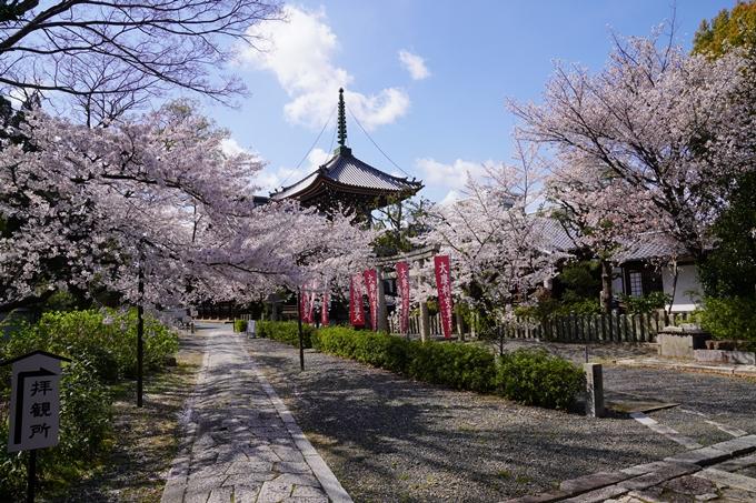 京都_桜_2020_28 本法寺 No11