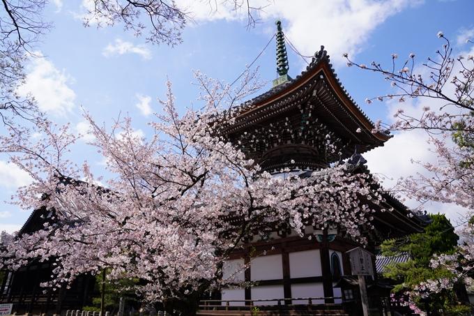 京都_桜_2020_28 本法寺 No12
