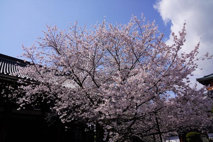 京都_桜_2020_28 本法寺 No20