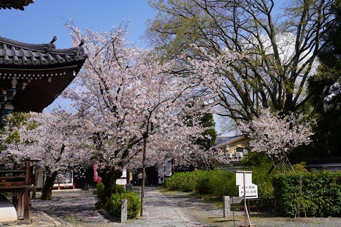 京都_桜_2020_28 本法寺 No22
