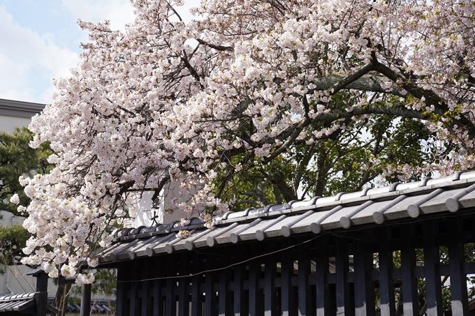 京都_桜_2020_30 妙蓮寺 No2