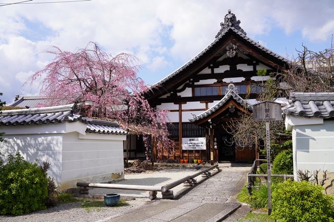京都_桜_2020_30 妙蓮寺 No4