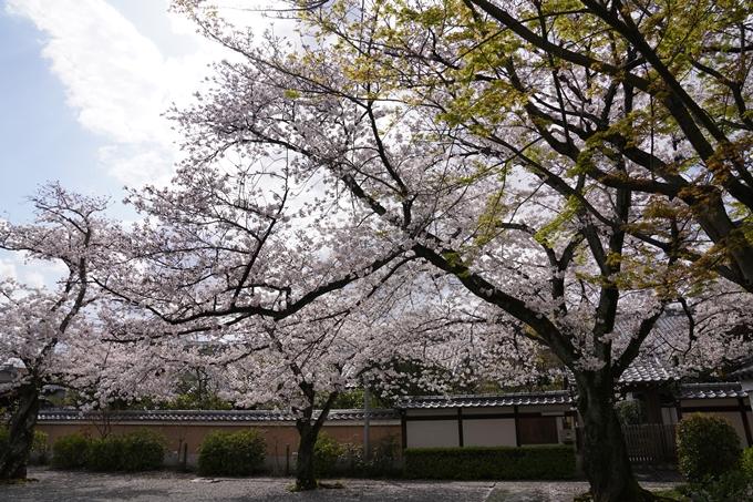 京都_桜_2020_30 妙蓮寺 No11