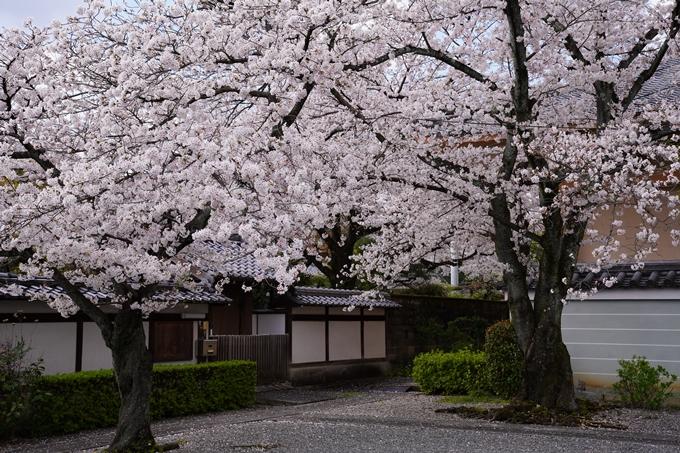京都_桜_2020_30 妙蓮寺 No12