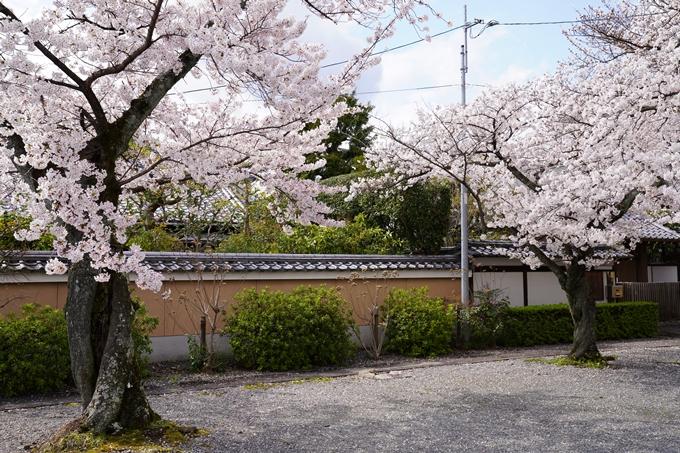 京都_桜_2020_30 妙蓮寺 No14