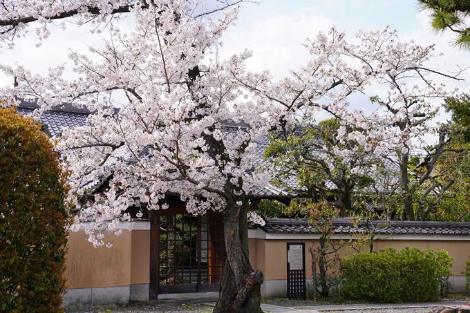 京都_桜_2020_30 妙蓮寺 No15