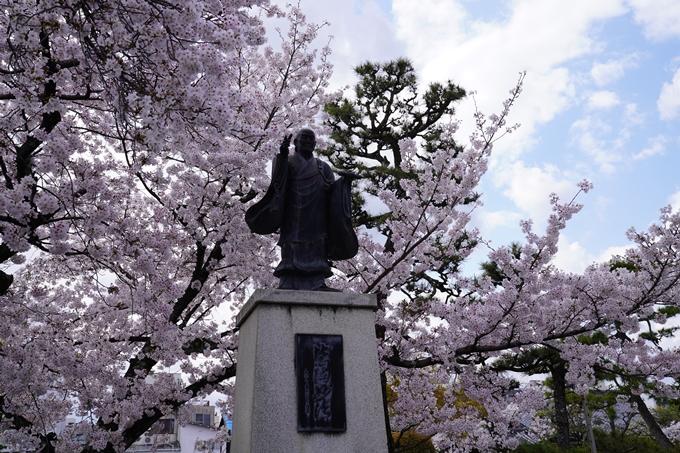 京都_桜_2020_30 妙蓮寺 No17