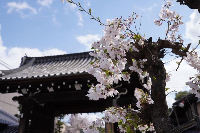 京都_桜_2020_30 妙蓮寺 No18