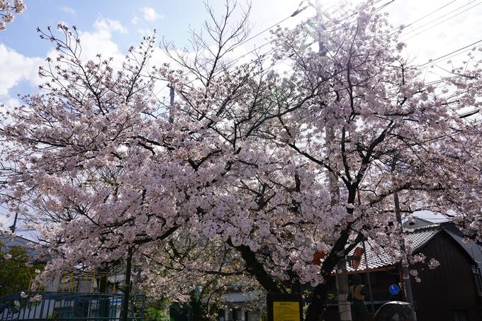 京都_桜_2020_31 雨宝院 No3