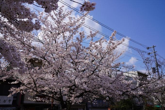 京都_桜_2020_31 雨宝院 No4