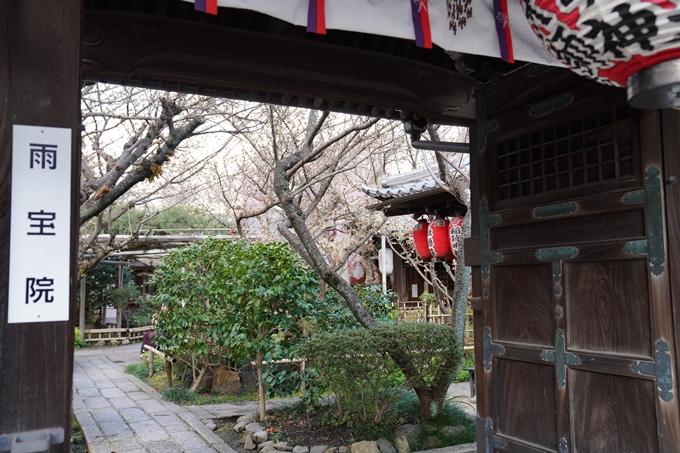 京都_桜_2020_31 雨宝院 No5