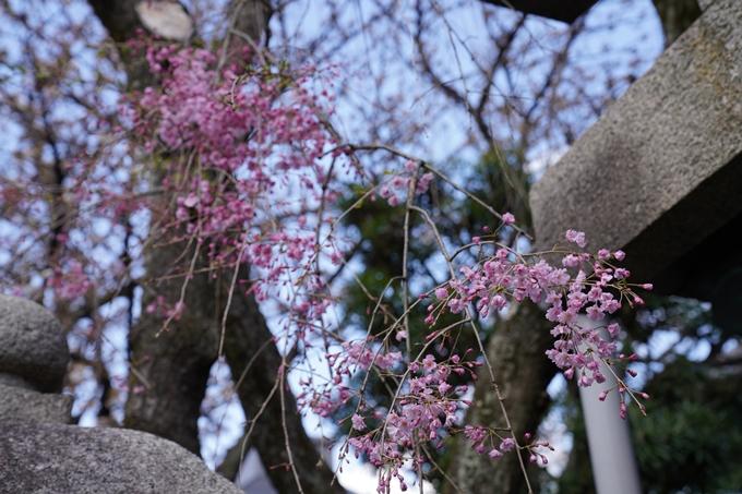 京都_桜_2020_31 雨宝院 No6