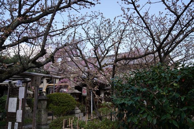 京都_桜_2020_31 雨宝院 No10