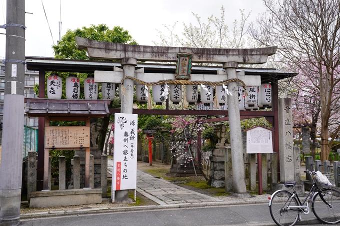 京都_桜_2020_32 桜井公園 No21