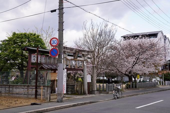 京都_桜_2020_32 桜井公園 No22