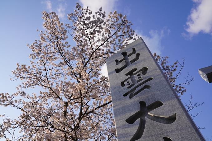 京都_桜_2020_34 出雲大神宮 No10