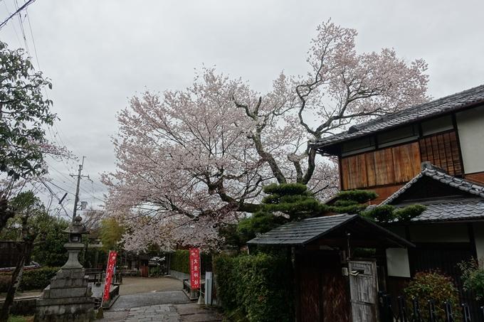 京都_桜_2020_19 大豊神社 No16