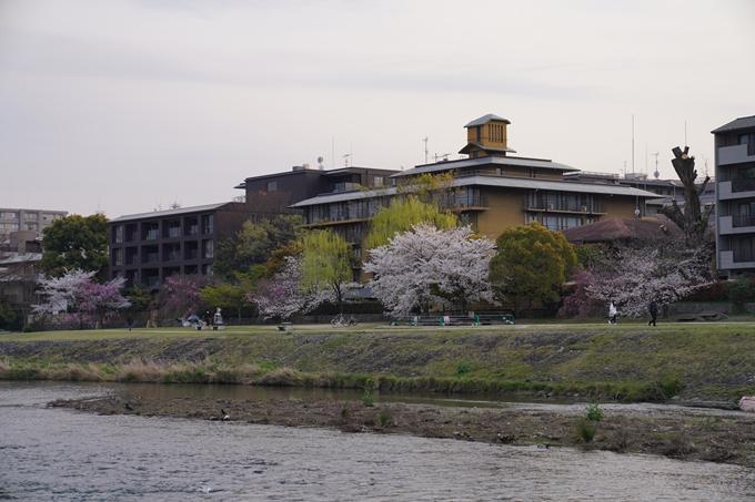 京都_桜_2020_35 鴨川 No8