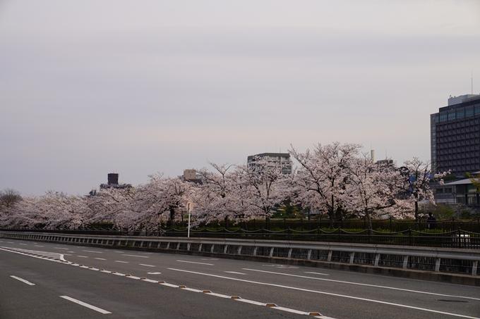 京都_桜_2020_35 鴨川 No14