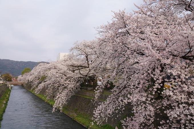 京都_桜_2020_36 疏水西部分 No2