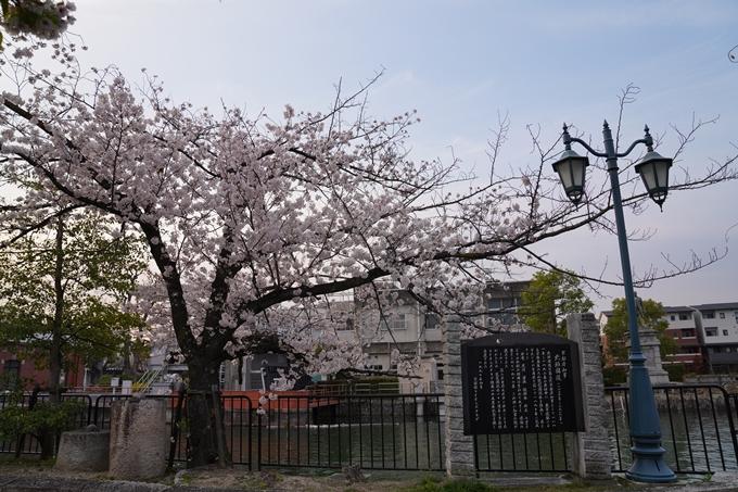 京都_桜_2020_36 疏水西部分 No6