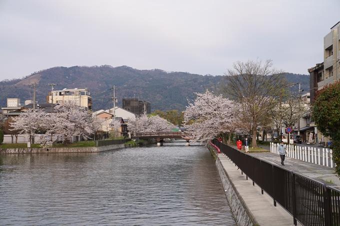 京都_桜_2020_36 疏水西部分 No7