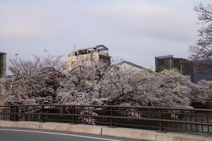 京都_桜_2020_36 疏水西部分 No8