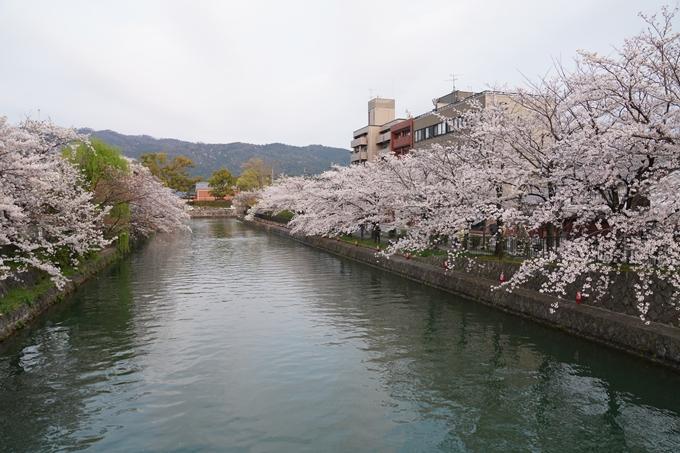 京都_桜_2020_36 疏水西部分 No15