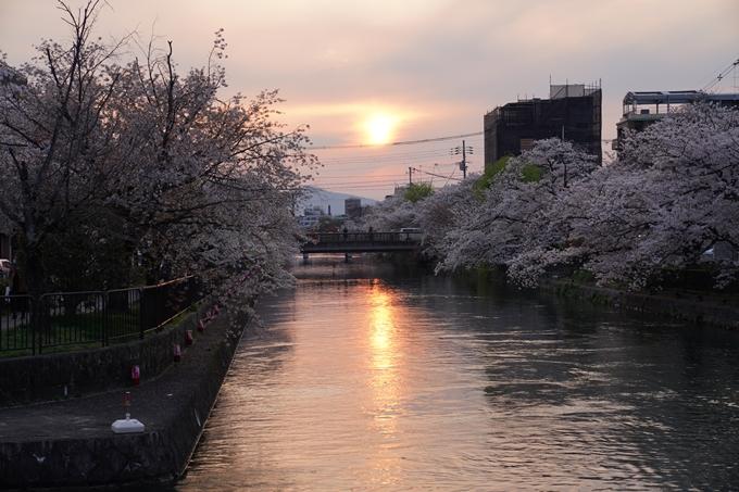 京都_桜_2020_36 疏水西部分 No18