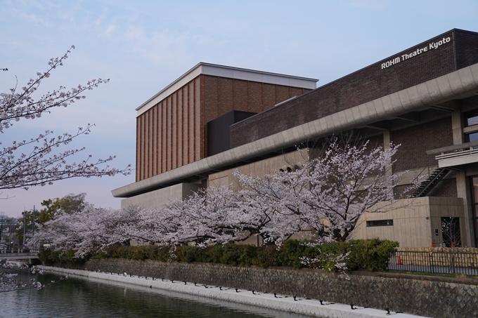 京都_桜_2020_36 疏水西部分 No19