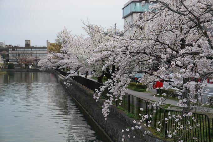 京都_桜_2020_36 疏水西部分 No20
