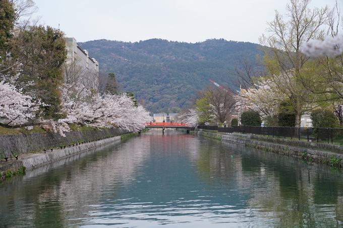 京都_桜_2020_37 岡崎疎水ライトアップ No2
