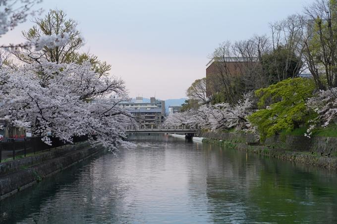京都_桜_2020_37 岡崎疎水ライトアップ No3