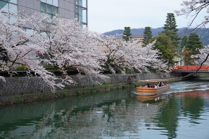 京都_桜_2020_37 岡崎疎水ライトアップ No6