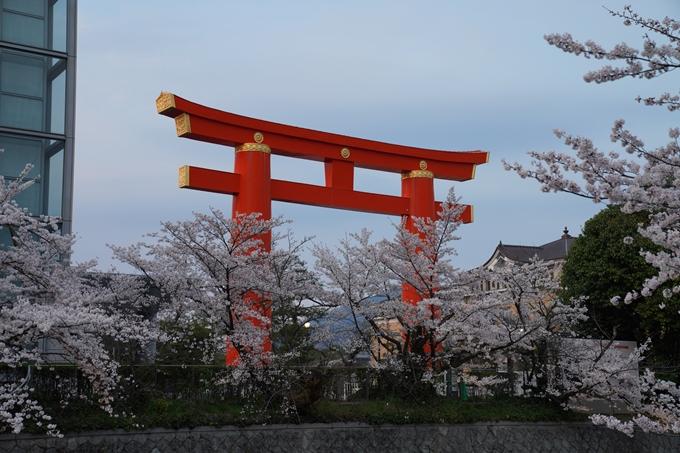 京都_桜_2020_37 岡崎疎水ライトアップ No8