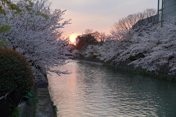 京都_桜_2020_37 岡崎疎水ライトアップ No9