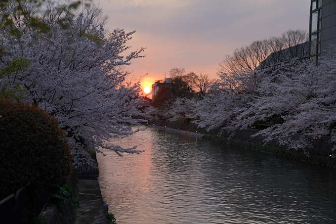 京都_桜_2020_37 岡崎疎水ライトアップ No10