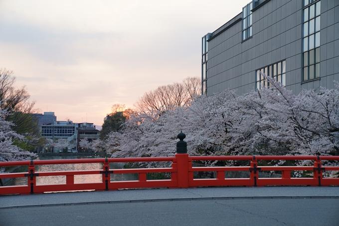 京都_桜_2020_37 岡崎疎水ライトアップ No11