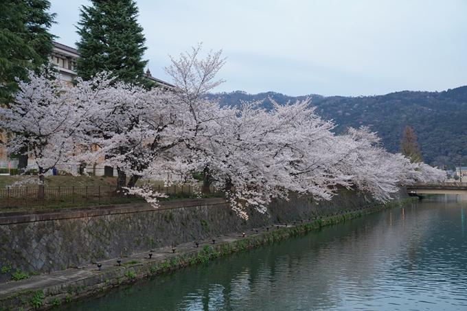 京都_桜_2020_37 岡崎疎水ライトアップ No12