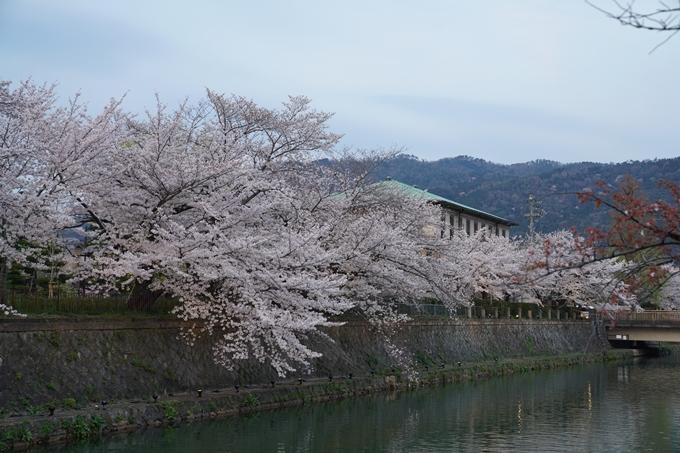 京都_桜_2020_37 岡崎疎水ライトアップ No14