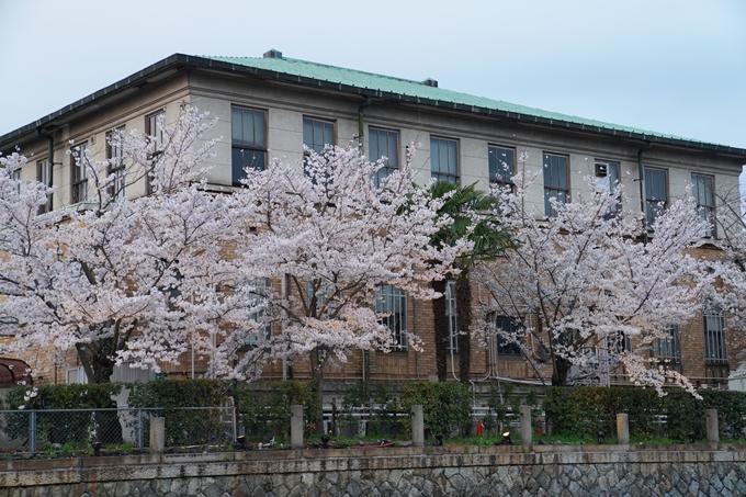 京都_桜_2020_37 岡崎疎水ライトアップ No15