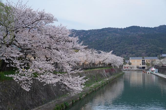 京都_桜_2020_37 岡崎疎水ライトアップ No16