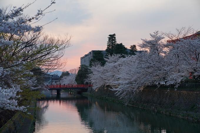 京都_桜_2020_37 岡崎疎水ライトアップ No17