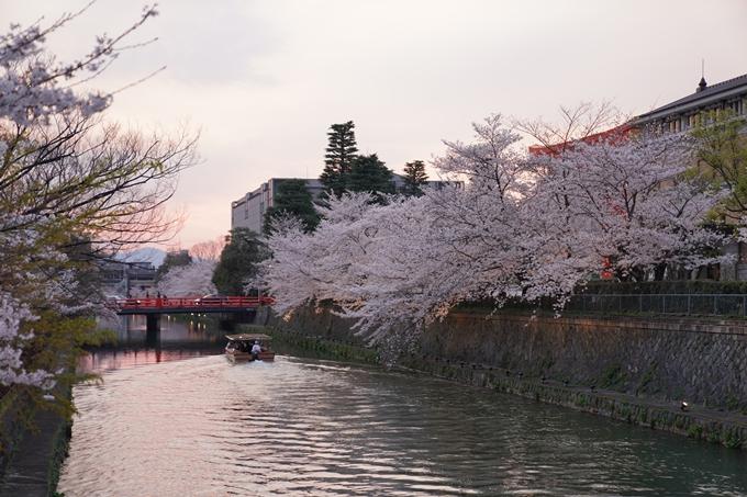 京都_桜_2020_37 岡崎疎水ライトアップ No18