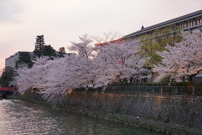 京都_桜_2020_37 岡崎疎水ライトアップ No19