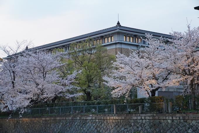 京都_桜_2020_37 岡崎疎水ライトアップ No20