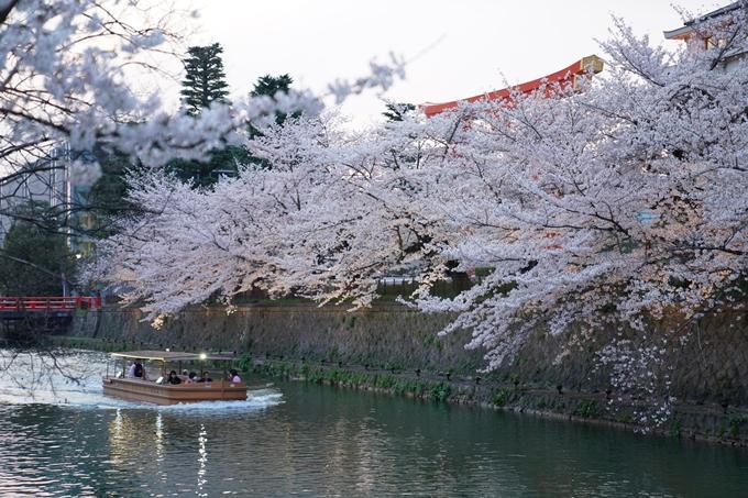 京都_桜_2020_37 岡崎疎水ライトアップ No21